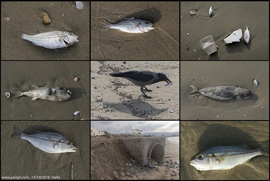 מרק דגים