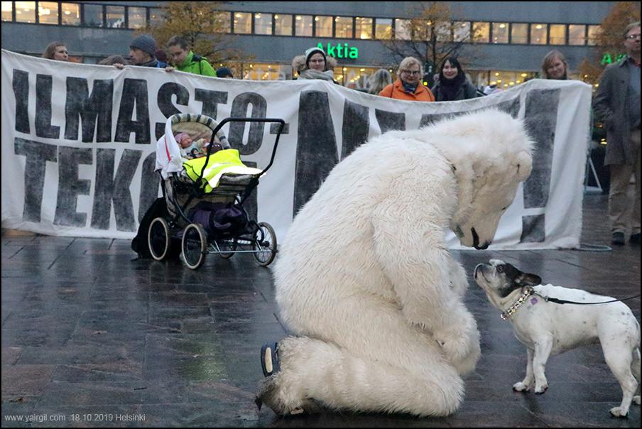 דב קוטב Pollar Bear