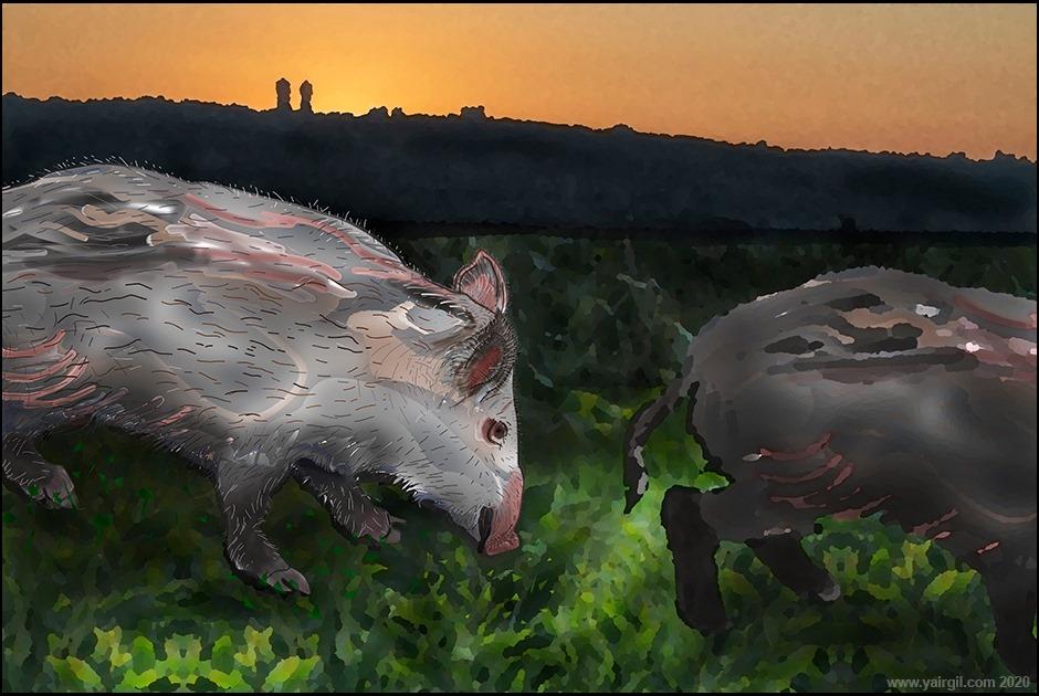 חזירי בר מהדגם החיפאי