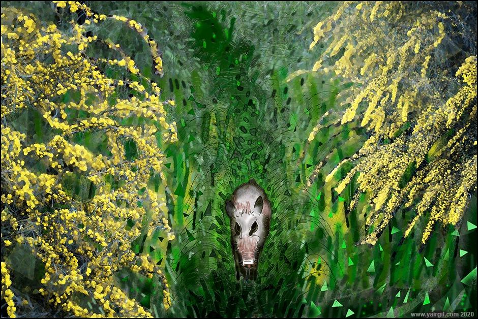 חזיר בר בטבע החיפאי
